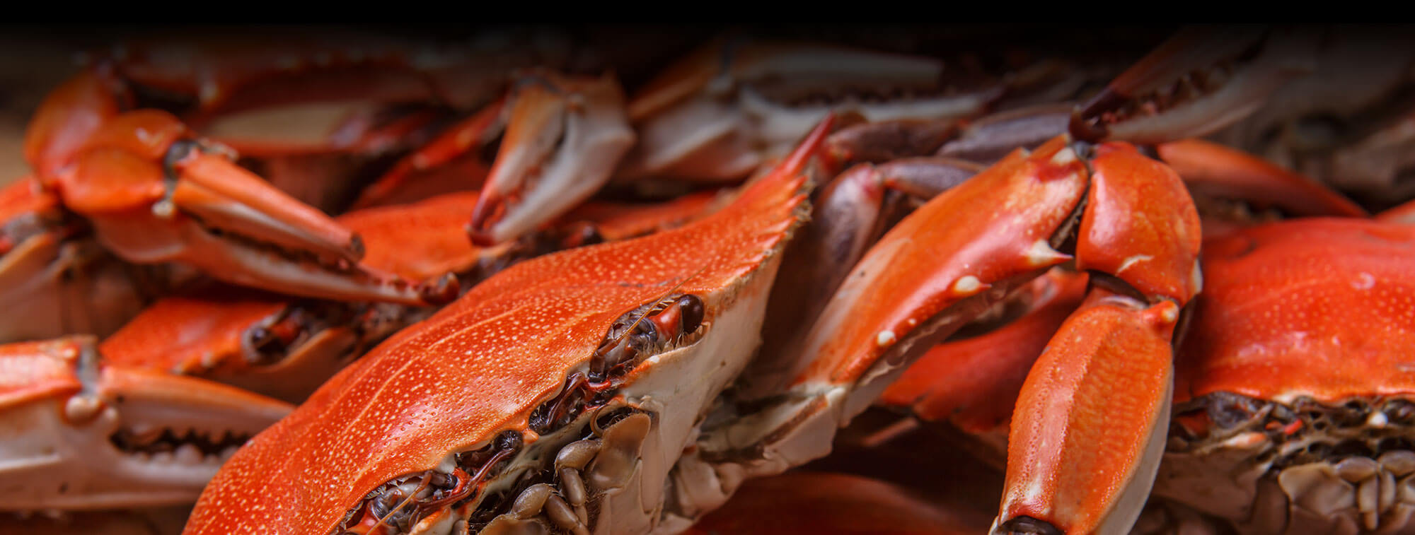 Best crabs salisbury md one fish two fish crabs seafood for Is fish seafood
